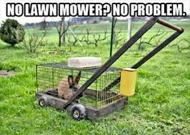 Grass Memes - no lawn mower animal meme