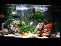 Live Rock Aquascaping Ideas The Goldfish Carassius Auratus Auratus Is A Freshwater Fish In