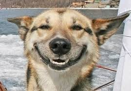 Dog Meme Generator - smiling happy dog meme generator