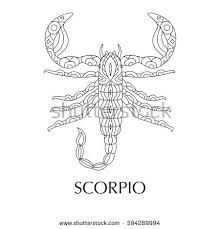 vector illustration scorpio zodiac sign stock vector