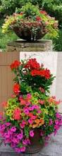 pin by meg maddox on flowers pinterest plants gardens and