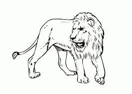 top african lion coloring pages womanmate com