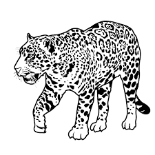 african animals coloring pages rain forest theme unit