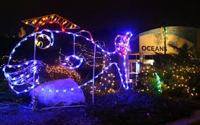Indianapolis Zoo Lights Www Lightneasy Net