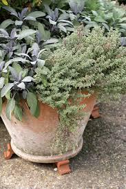 Herb Garden Winter - herbs in containers rhs gardening