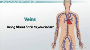 closed circulatory system definition u0026 advantage video u0026 lesson