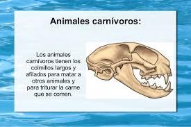 imagenes de animales carnivoros para imprimir los dientes y la alimentación de los animales