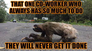 Lazy Worker Meme - lazy co workes imgflip