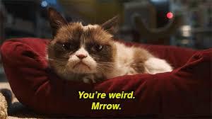 Mad Cat Memes - mad cat meme find make share gfycat gifs