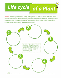 life cycle of a plant life cycles worksheets and cycling