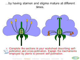 plant reproduction click to enter ppt video online download