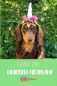 party city lubbock halloween costumes best 25 diy dog costumes ideas on pinterest dog halloween