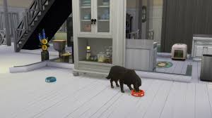 black dog and the white paws don u0027t show up u2014 the sims forums