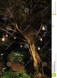 Hanging Tree Lights by Lanterns Hanging From Tree At Night Stock Photo Image 63787825