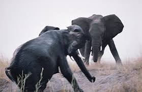 Blind Men And The Elephant Story For Children In The Absence Of Fathers A Story Of Elephants And Men