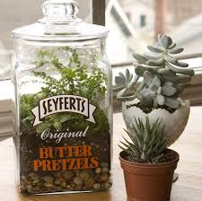 71 best indoor herb gardens u0026 terrariums images on pinterest