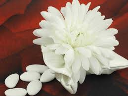 fleurs blanches mariage nom fleur blanche mariage la pilounette