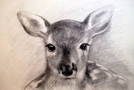 drawing a doe pencil speed youtube