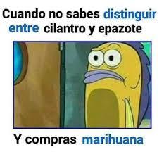 Memes Para Facebook En Espaã Ol - memes en espa祓ol para el facebook no saber distinguir las hierbas