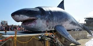 film kartun ikan hiu 50 gambar ikan hiu terbesar di dunia berbagai jenis spesies langka
