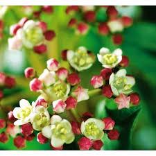 grã npflanzen fã r balkon immergrune graser immergra 1 4 ne gartenpflanzen straucher und