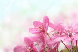 closeup of beautiful pink flowers in the garden stock photo