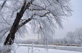 winter snow tree free stock photos 17 008 free stock