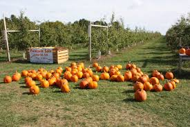 pumpkins for sale there are plenty of pumpkins for sale all concord the