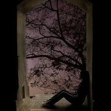 window tree silhouette purp pixdaus