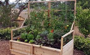 vegetable garden planning for beginners olt