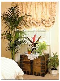best plants for bedroom plants for a bedroom