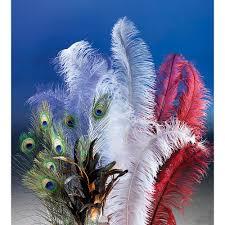 plumeau en plume d autruche déco plume d u0027autruche blanche u0026 décoration chez decowoerner