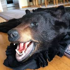 Taxidermy Bear Rug 172 Best Taxidermy Images On Pinterest Deer Mounts Taxidermy