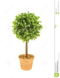 small tree royalty free stock image image 2537936