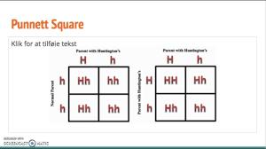punnett square and pedigree diagram youtube