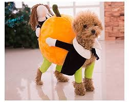 Funny Animal Halloween Costumes Nice Funny Dog Clothes Small Dogs Carrying Pumpkin Halloween