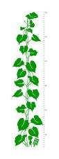australian shepherd growth chart jack u0026 the beanstalk growth chart vinyl wall decal