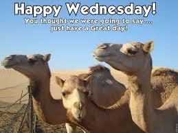 Hump Day Camel Meme - happy wednesday wednesday hump day hump day camel wednesday quotes