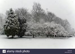 heavy snow snowfall on pretty trees and benches in park brighton