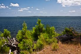 Texas forest images East texas beauty angelina national forest texas landscape jpg
