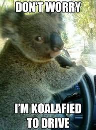 Driving School Meme - lobo defensive driving school home facebook
