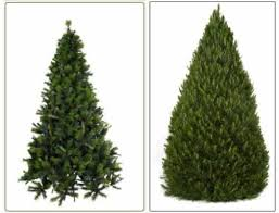 real trees types pictures reference