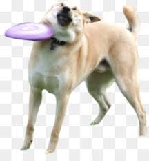 Know Your Meme Dog - doge flying discs disc dog know your meme doge png download 2848