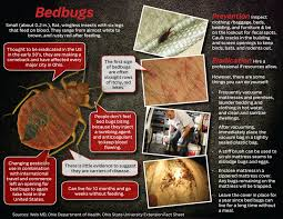 Can Bed Bugs Live In Water Bugs Remain U0027on Going Problem U0027 Here