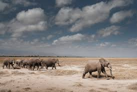 elephant african wildlife foundation