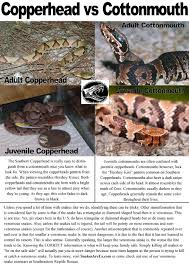 snakes of georgia venomous snakes reptile removal of nuisance