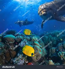 underwater scene two dolphins yellow fish stock photo 89590498