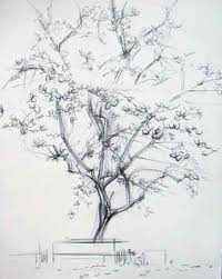 cherry blossom tree drawing cherry cherries