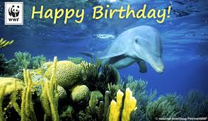 free ecard birthday birthday ecards from wwf free birthday ecards world wildlife fund