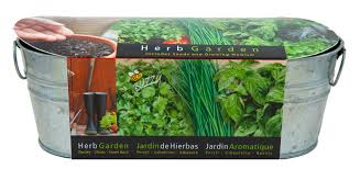 windowsill herb garden kit gardening ideas